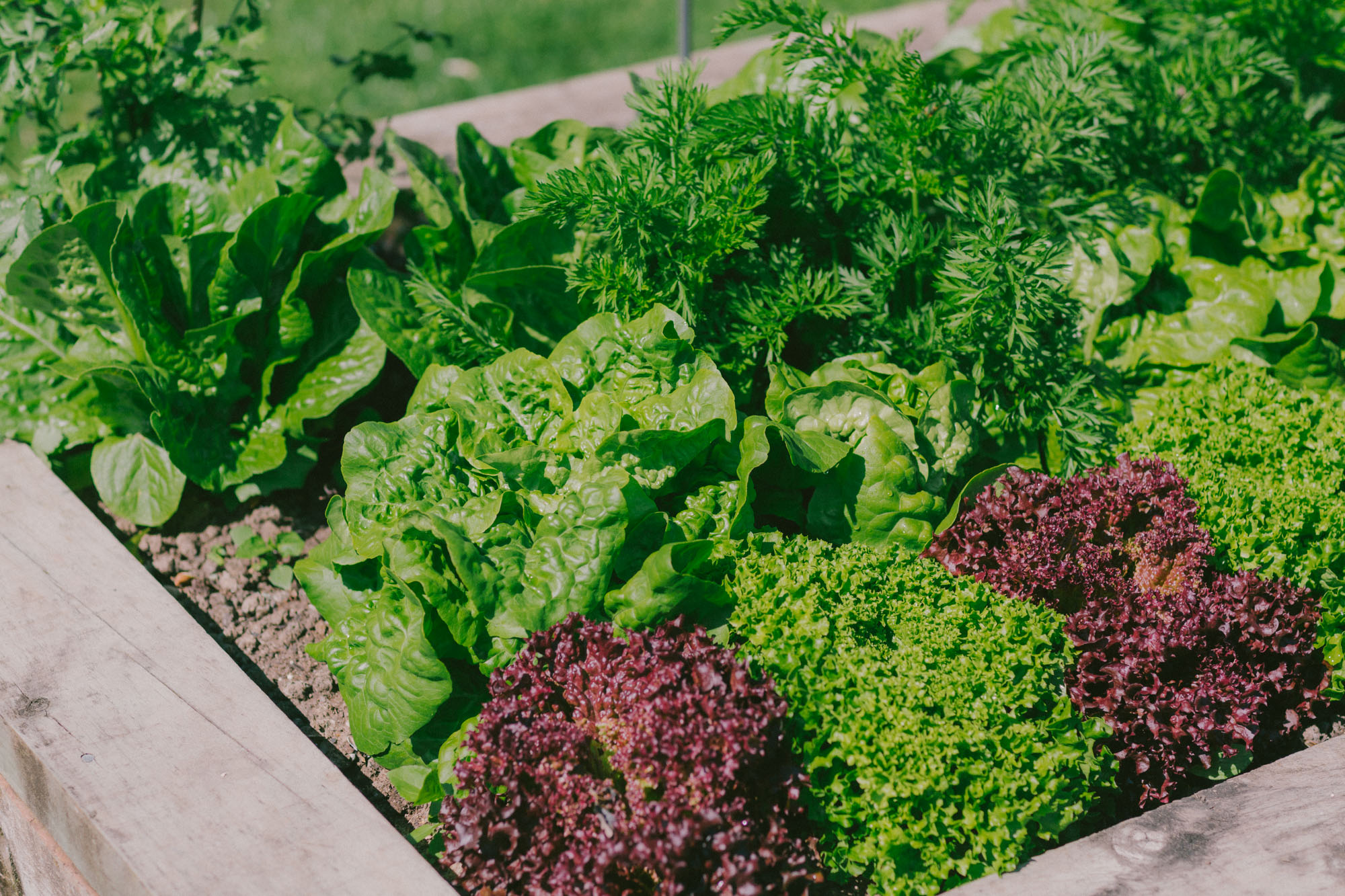 Image of: A Beginner S Guide To Vegetable Gardening