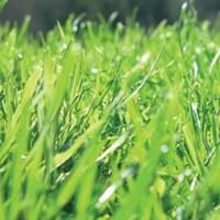 Lawn Growing Guide
