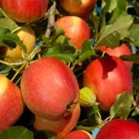 Fruit Tree Growing Guide