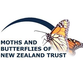 Tui - Moths And Butterflies