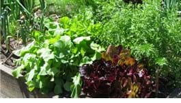 A Beginner's Guide to Vegetable Gardening