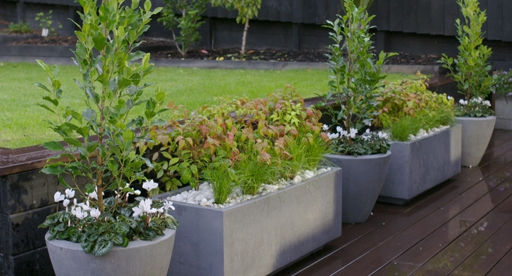 Container Gardening Guide, Tall Potted Plants Patio Privacy Nz