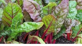 Winter Greens Gardening Guide