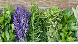 Summer Herb Growing Guide
