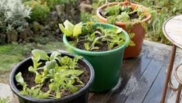 Organic Container Gardening Guide