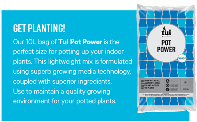 http://www.tuigarden.co.nz/product/tui-pot-power
