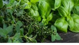 Top Tips for Homegrown Herbs
