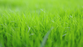 Top Tips for a Beautiful Lawn