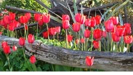Grow Beauitful Vibrant Bulbs