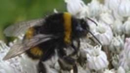 Bee aware and Bee friendly