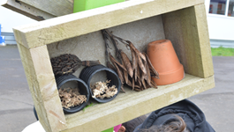 Create a bug house at home or school