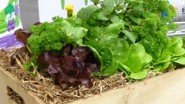 Tops tips for salad greens