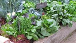 5 Top Tips for Your Spring Vege Patch!