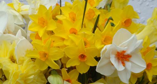 Spring Flower Favourites