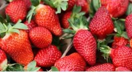 Top Tips for Strawberries