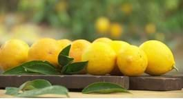 Top Tips for Successful Citrus