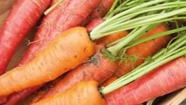 Carrot Growing Guide