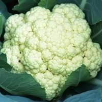 Cauliflower Growing Guide