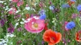 Wild Flowers - Blooming Marvellous!