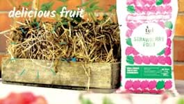 Strawberry Straw Bale Gardening Hack