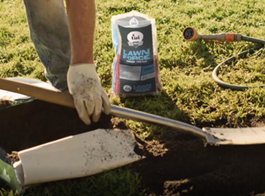 Choosing the Right Lawn Seed