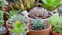 Easy-care plant options