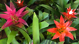 Top Tips for Orchids & Bromeliads