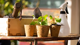 4 Ways to Grow More Plants