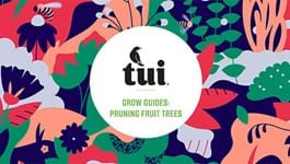 Tui Grow Guides - Pruning Fruit Trees