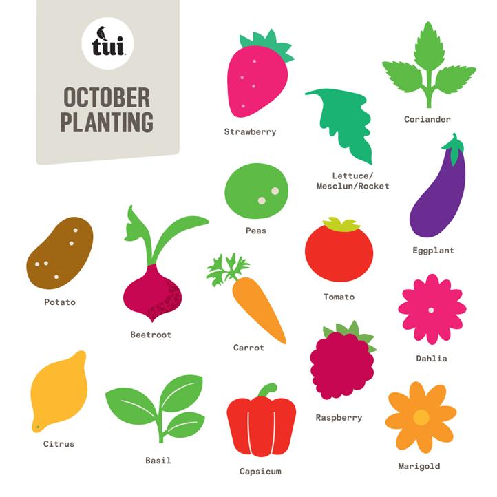 October Gardening Guide