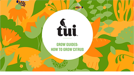 Tui Grow Guides - How to grow successful citrus